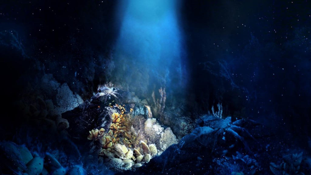 Life 2.000 meters under the sea